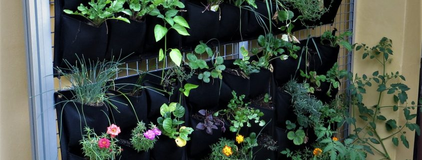 Flowers and herbs in a vertical garden