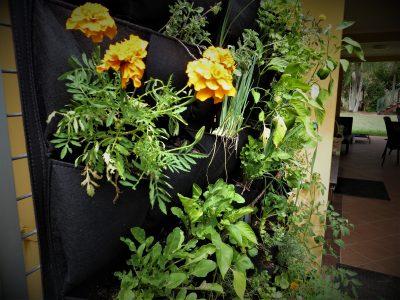 Go green this summer with a vertical garden - aluminium extrusion